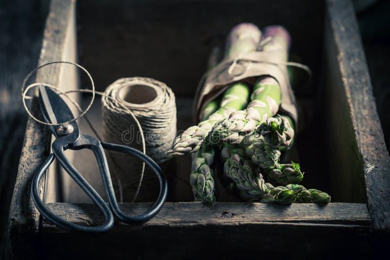 Rå grön sparris i gammal träask arkivbilder