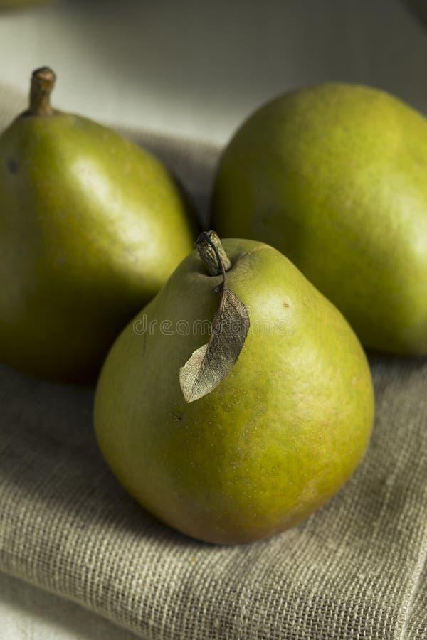 Rå gröna organiska Seckel päron royaltyfri foto