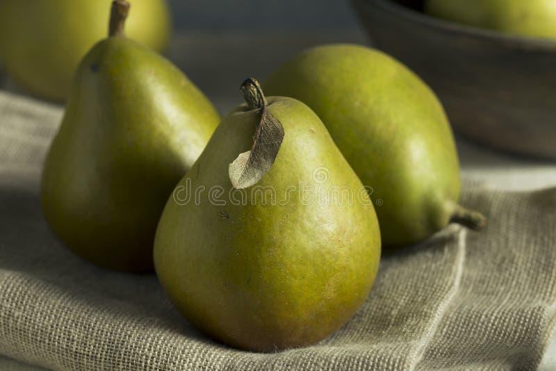 Rå gröna organiska Seckel päron arkivbilder
