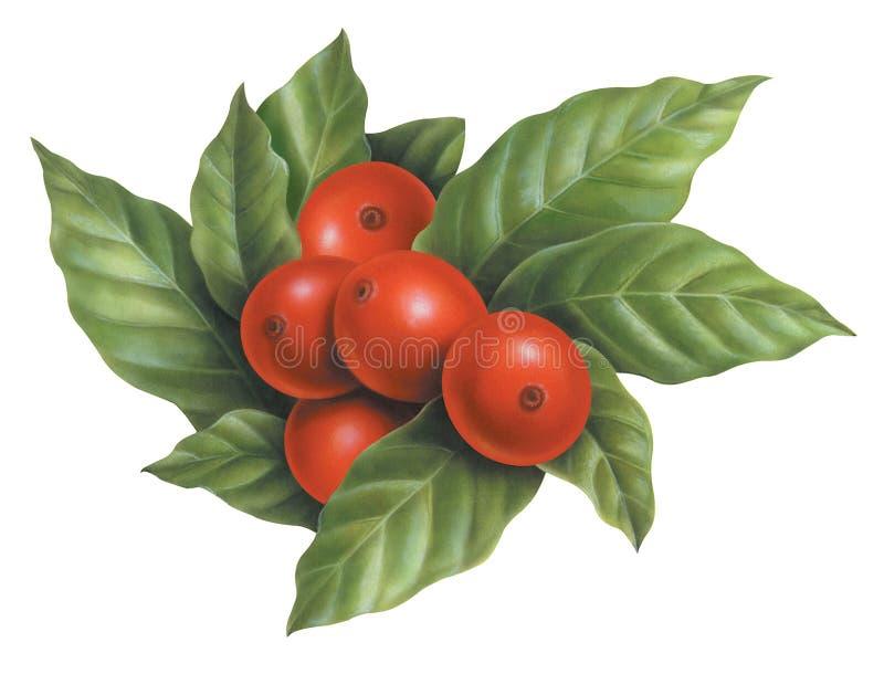 Rå kaffebönakonst royaltyfri illustrationer