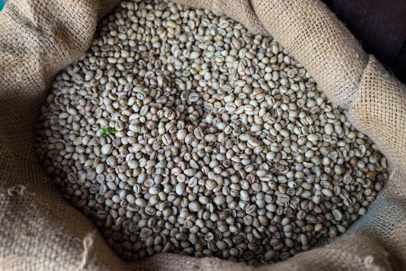 Rå kaffebönor i säck Vietnamesiskt traditionellt kaffe royaltyfria foton