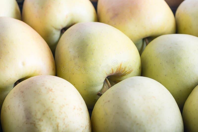Rå läckra äpplen som är guld- med hudbakgrund royaltyfri fotografi