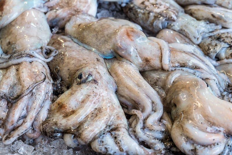 Rå ny bläckfiskbakgrund på is royaltyfri foto