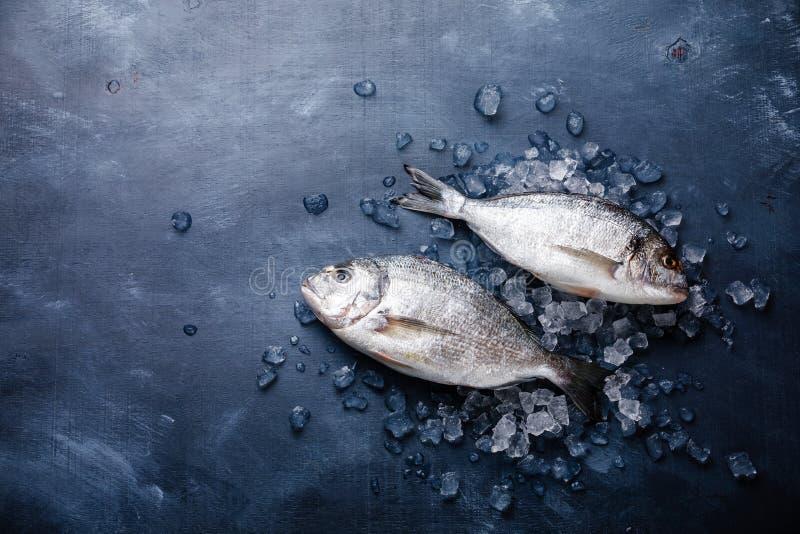 Rå ny fisk Dorado på is royaltyfri fotografi