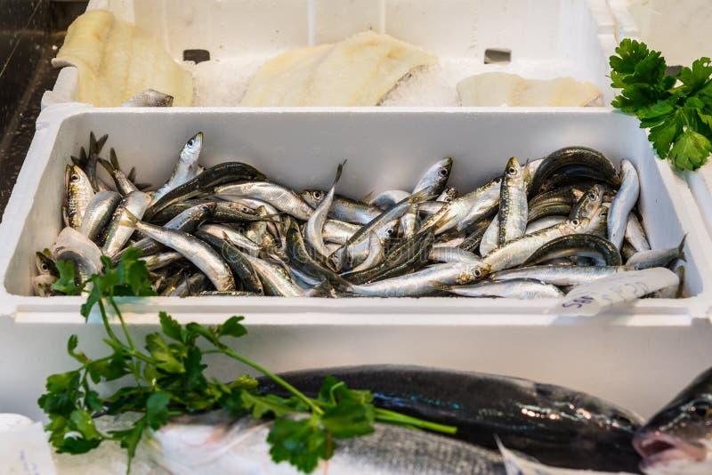 Rå nya medelhavs- sardiner på is arkivbilder