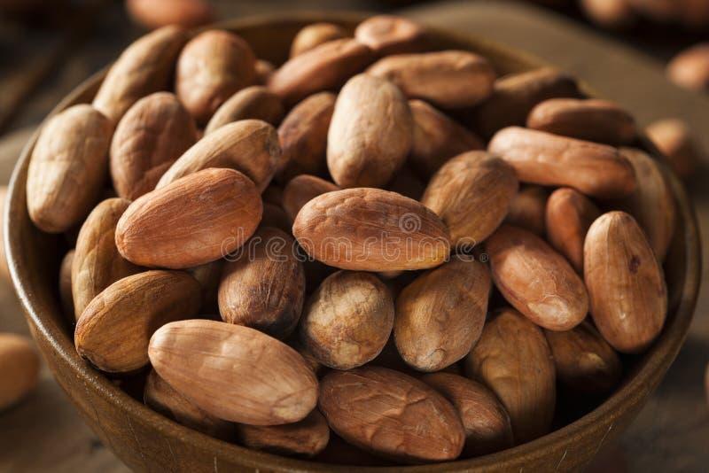 Rå organiska kakaobönor royaltyfri bild