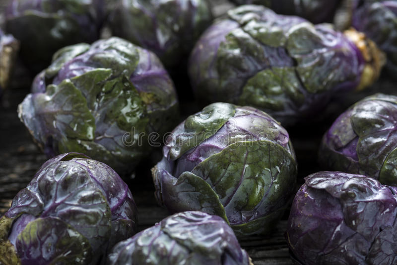 Rå organiska purpurfärgade Bryssel groddar royaltyfri foto