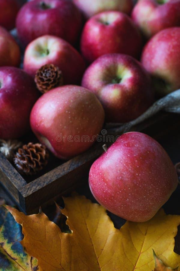 Rå organiska röda höstäpplen i träask med gula leafes och kottar arkivfoto