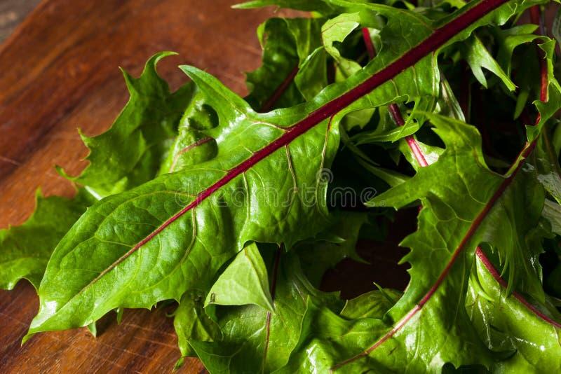 Rå organiska röda maskrosgräsplaner fotografering för bildbyråer