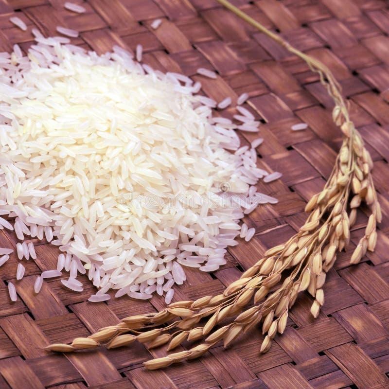 rå rice royaltyfri fotografi