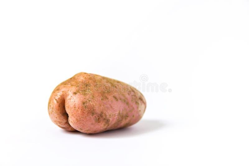 Rå rolig potatis i en form av royaltyfri foto