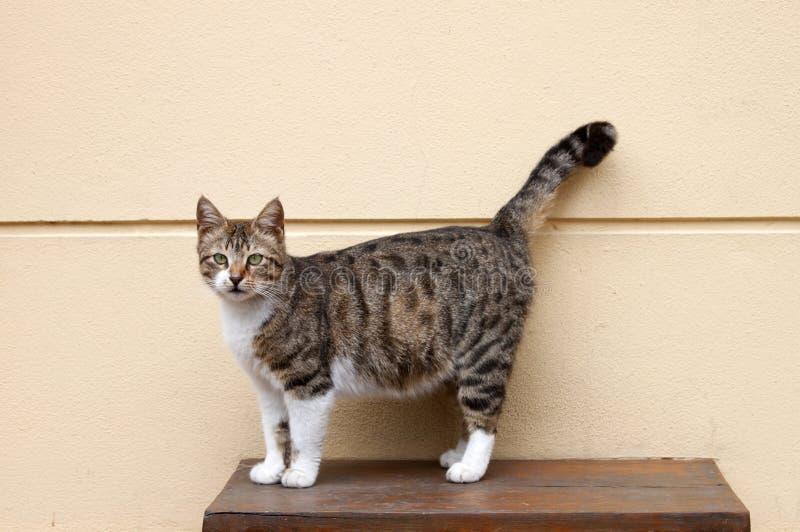 rå tabell för kattformat arkivfoton