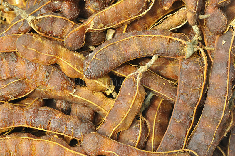 rå tamarindfrukt arkivfoton