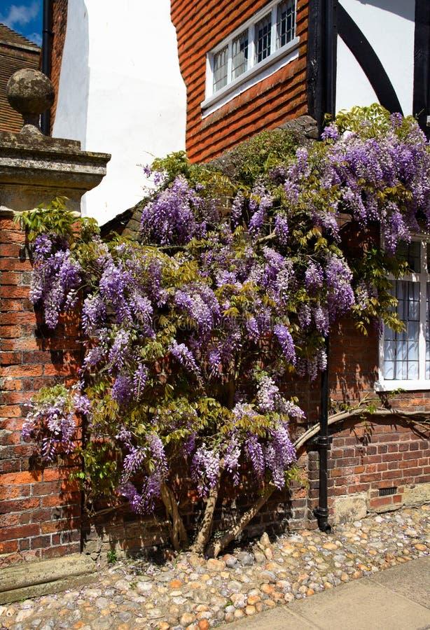 Råg - blomma grannskapen - mig - UK fotografering för bildbyråer