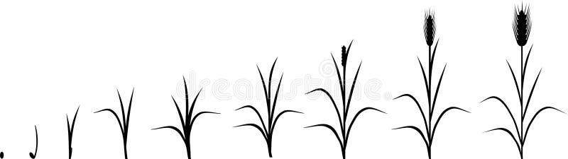 Råglivcirkulering vektor illustrationer