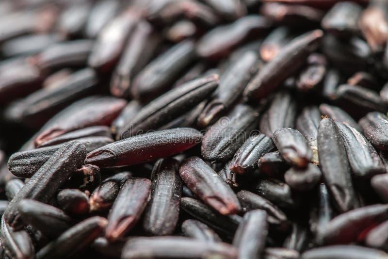 Rått korn i Thailand, namn: risbär (svart ris för jasmin) royaltyfri fotografi