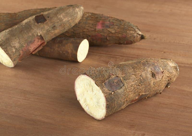 rått trä för cassava arkivfoton