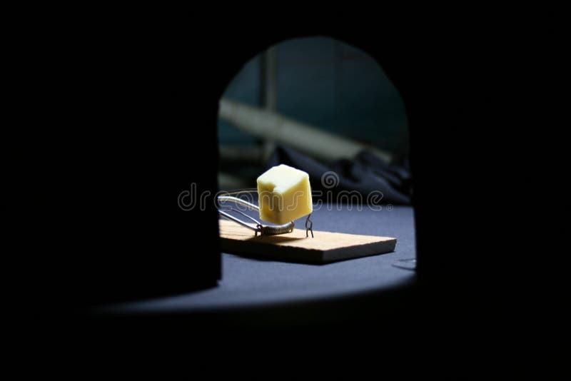 Råttfälla med ost royaltyfri fotografi
