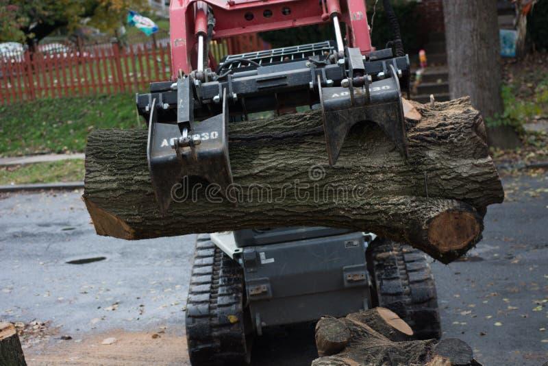 Règlage et retrait d'arbre photos libres de droits
