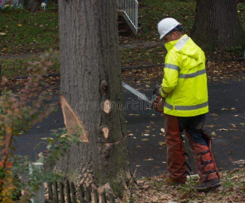 Règlage et retrait 2 d'arbre image stock