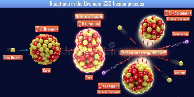 Réactions dans le processus de la fission Uranium-235 illustration de vecteur
