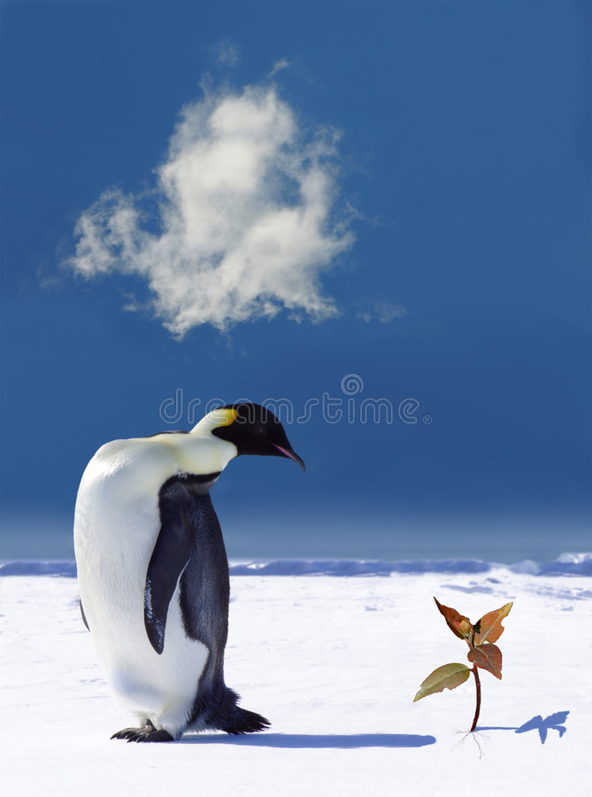 Réchauffement global en Antarctique photo libre de droits