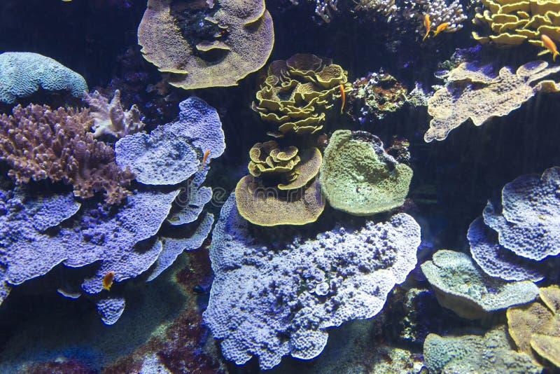 Récif coralien avec les coraux mous et durs photo libre de droits
