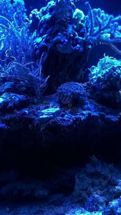 Récif coralien bleu photo stock
