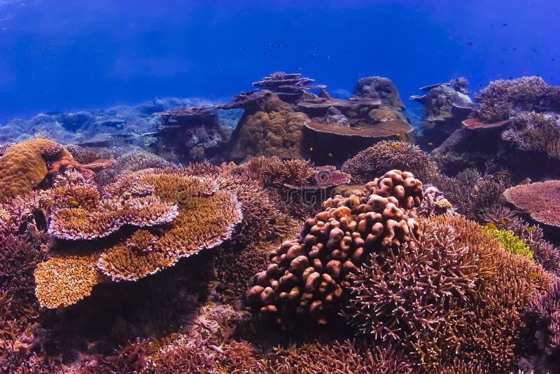 Récif coralien coloré image libre de droits