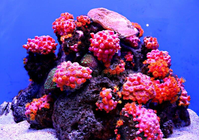 Récif coralien coloré photo stock