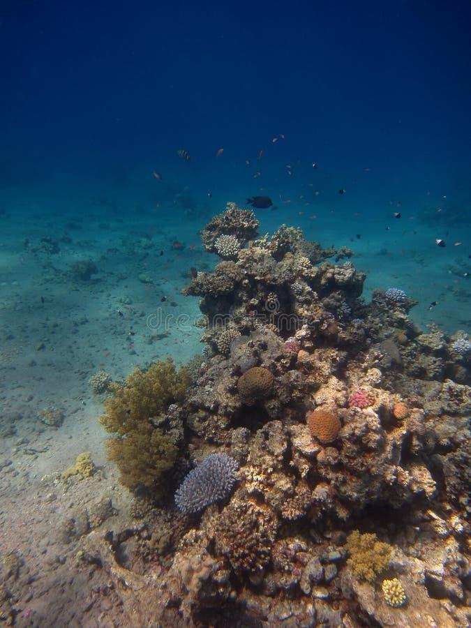 Portrait de récif coralien photos libres de droits