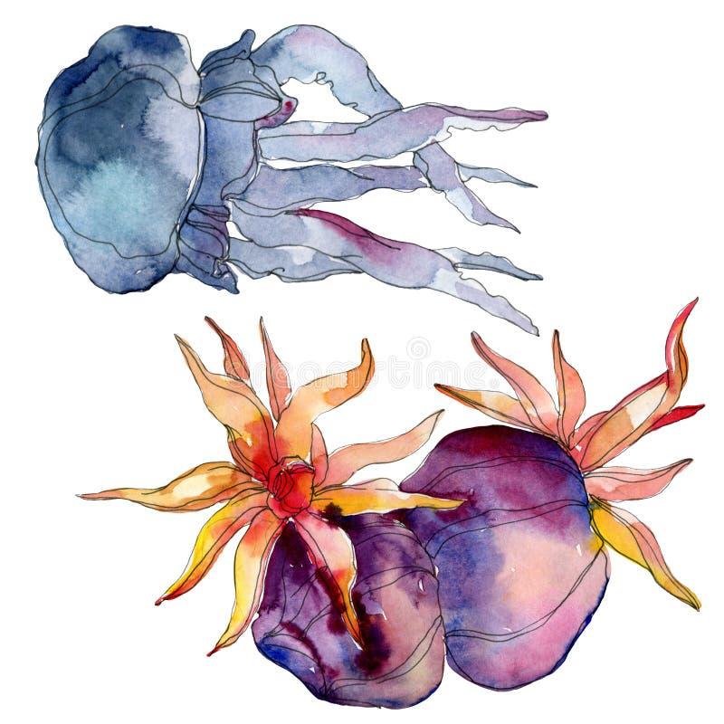 Récif coralien de méduses et de nature sous-marine aquatique Mer de plante tropicale d'isolement Ensemble d'illustration de fond  illustration stock