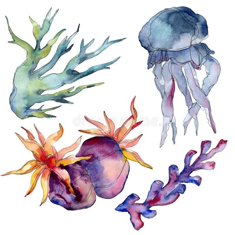 Récif coralien de méduses et de nature sous-marine aquatique Mer de plante tropicale d'isolement Ensemble d'illustration de fond  image libre de droits