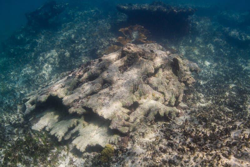 récif coralien des Caraïbes photos libres de droits