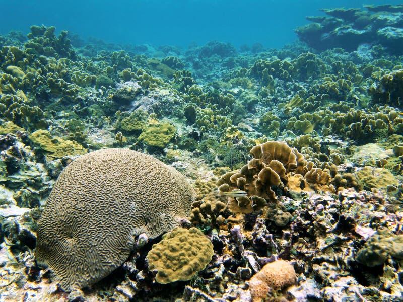 Récif coralien des Caraïbes photographie stock libre de droits