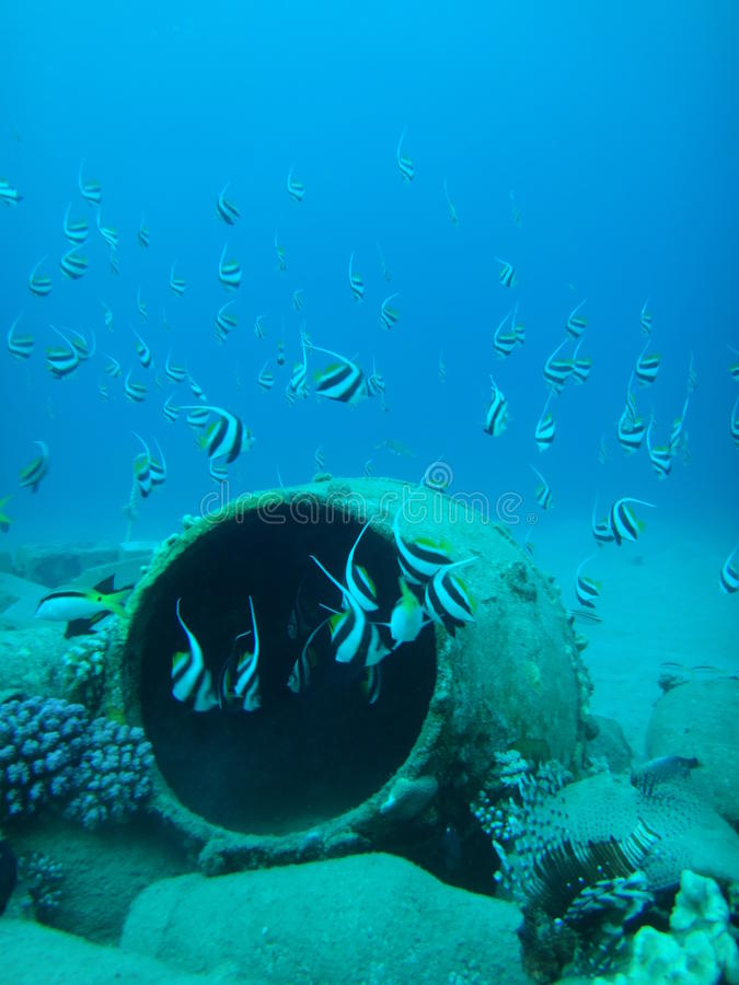 Récif coralien en Egypte 1 images libres de droits