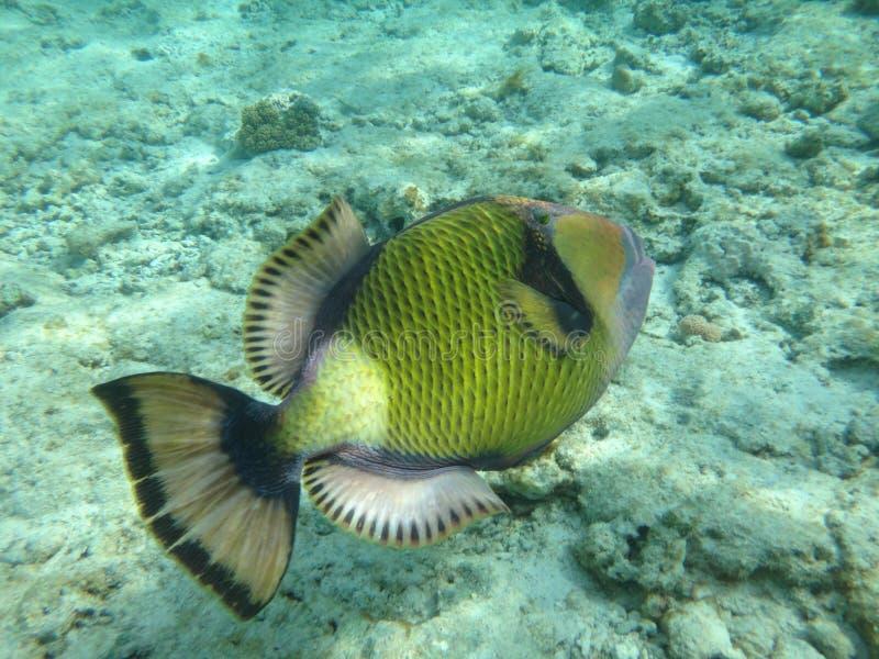 Récif coralien en Egypte 5 photos stock