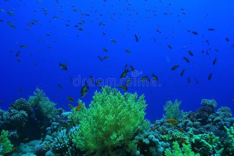 Récif coralien en mer chaude photo libre de droits