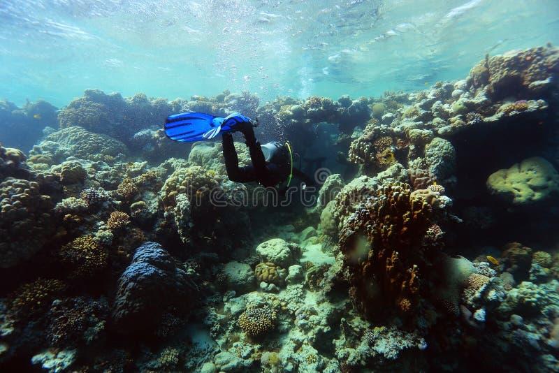 Récif coralien en mer chaude photographie stock libre de droits