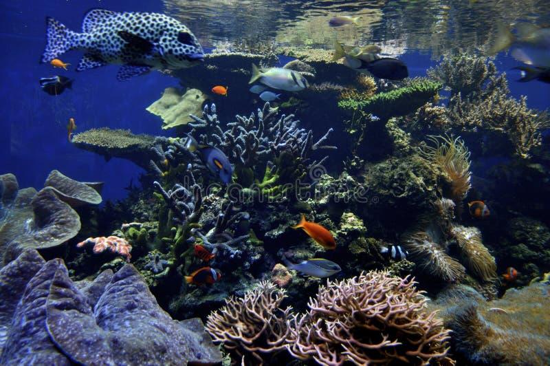 Récif coralien hawaïen photos libres de droits