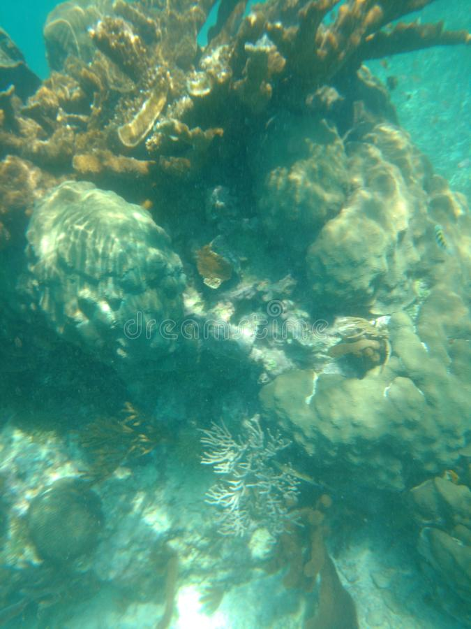 Récif coralien Puerto Morelos Mexique images libres de droits