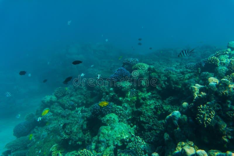 Récif coralien sous-marin de mer ou d'océan Vocation d'été photo stock