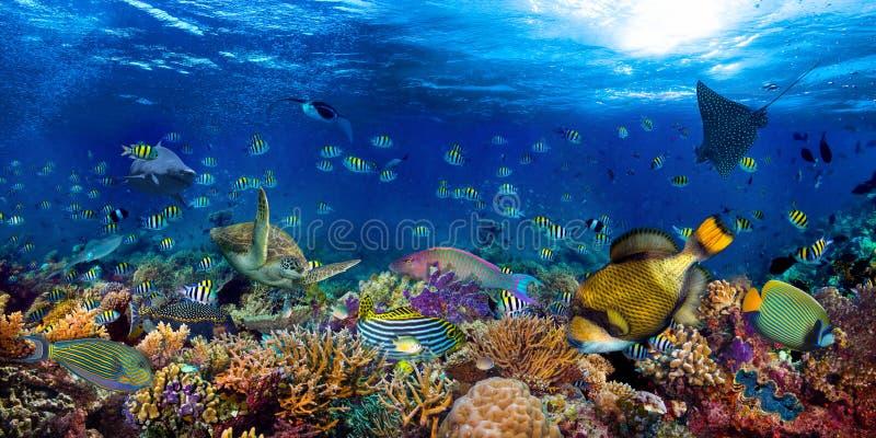 Récif corallien sous-marin paysage panoramique 2à1 arrière-plan panoramique dans l'océan bleu profond avec poissons colorés tortu photo stock