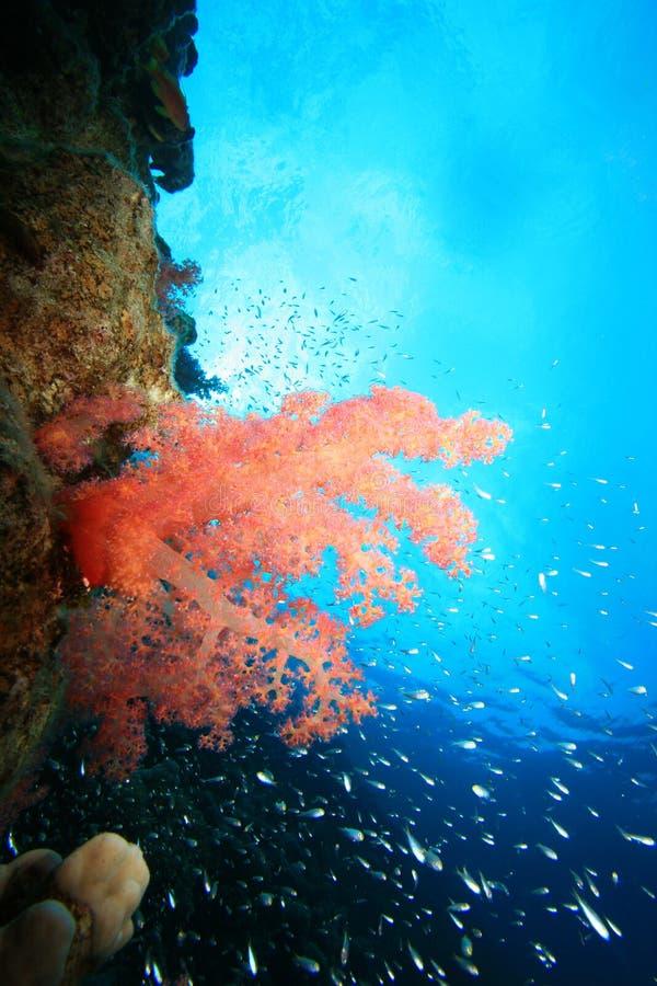 récif de corail de poissons tropical photos stock