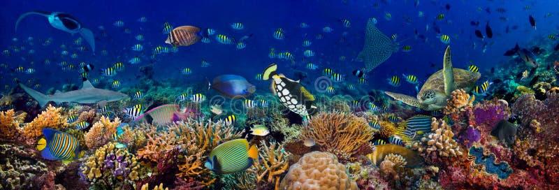 Récif de corail sous-marin paysage panoramique de 3à1 fond panoramique dans l'océan bleu profond avec poissons colorés tortue mar photos stock