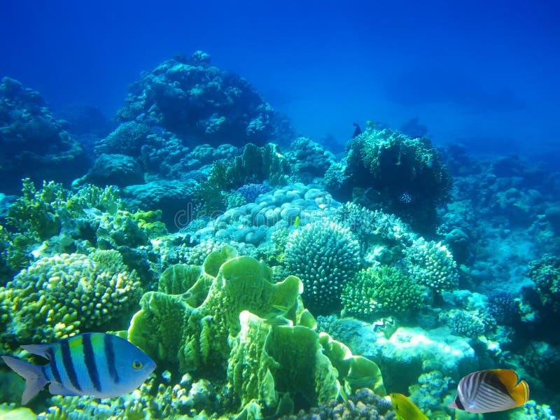 récif de Dur-corail images stock
