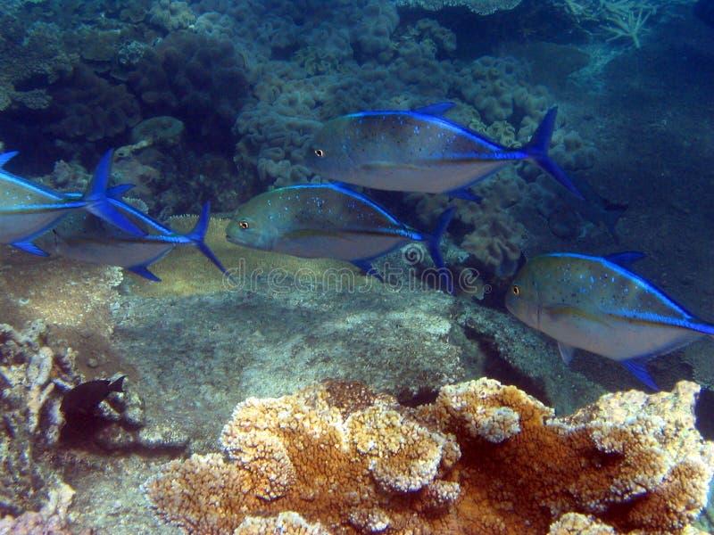 récif grand de barrière sous-marin images stock