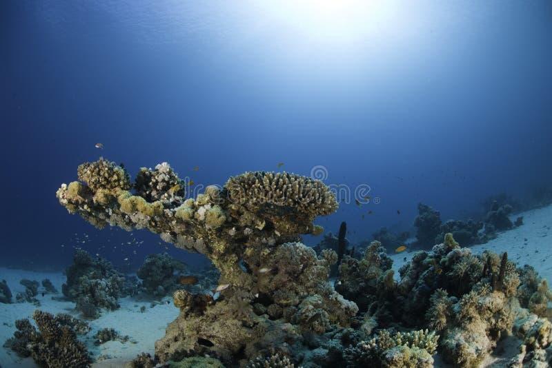 Récif sous-marin images stock