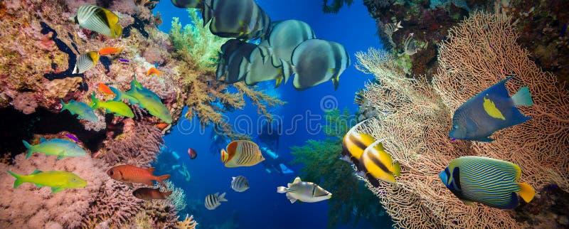 Récif sous-marin coloré avec le corail et les éponges photos stock