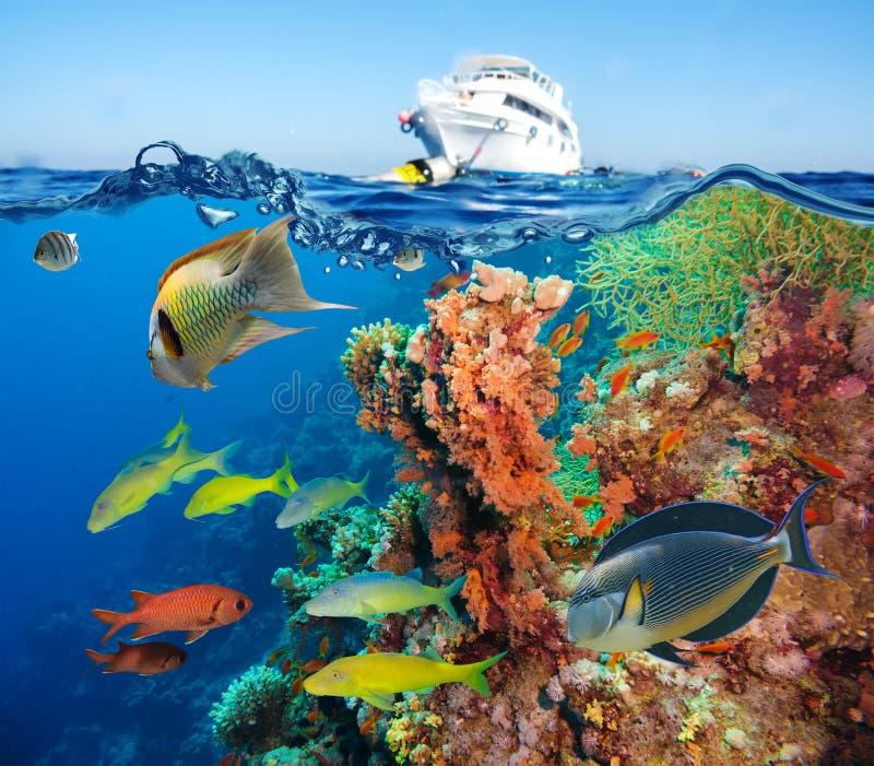 Récif sous-marin coloré avec le corail et les éponges photo libre de droits
